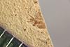 http://mczbase.mcz.harvard.edu/specimen_images/entomology/paleo/large/PALE-40264_Arthropoda.jpg
