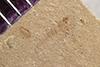 http://mczbase.mcz.harvard.edu/specimen_images/entomology/paleo/large/PALE-40466_Arthropoda.jpg
