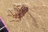 http://mczbase.mcz.harvard.edu/specimen_images/entomology/paleo/large/PALE-40503_Arthropoda.jpg