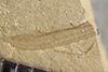 http://mczbase.mcz.harvard.edu/specimen_images/entomology/paleo/large/PALE-40508_Arthropoda.jpg