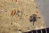 http://mczbase.mcz.harvard.edu/specimen_images/entomology/paleo/large/PALE-40541_Arthropoda.jpg