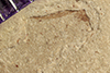 http://mczbase.mcz.harvard.edu/specimen_images/entomology/paleo/large/PALE-40738_Arthropoda.jpg
