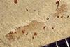 http://mczbase.mcz.harvard.edu/specimen_images/entomology/paleo/large/PALE-40778_Arthropoda.jpg