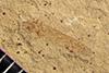http://mczbase.mcz.harvard.edu/specimen_images/entomology/paleo/large/PALE-40782_Arthropoda.jpg