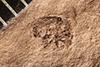 http://mczbase.mcz.harvard.edu/specimen_images/entomology/paleo/large/PALE-4082_Cryptorhynchus_kerri_type.jpg