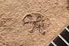 http://mczbase.mcz.harvard.edu/specimen_images/entomology/paleo/large/PALE-4085_Cryptorhynchus_kerri_type.jpg
