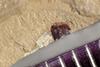 http://mczbase.mcz.harvard.edu/specimen_images/entomology/paleo/large/PALE-40959_Arthropoda.jpg