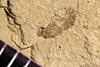 http://mczbase.mcz.harvard.edu/specimen_images/entomology/paleo/large/PALE-41049_Arthropoda.jpg