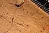 http://mczbase.mcz.harvard.edu/specimen_images/entomology/paleo/large/PALE-4104_Aeschna_separata_holotype_1_(cp_398).jpg