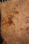 http://mczbase.mcz.harvard.edu/specimen_images/entomology/paleo/large/PALE-4106_Cymatomera_maculata_type_2.jpg