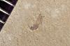 http://mczbase.mcz.harvard.edu/specimen_images/entomology/paleo/large/PALE-41149_Arthropoda.jpg
