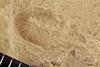 http://mczbase.mcz.harvard.edu/specimen_images/entomology/paleo/large/PALE-41170_Arthropoda.jpg