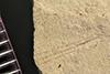 http://mczbase.mcz.harvard.edu/specimen_images/entomology/paleo/large/PALE-41174_Arthropoda.jpg