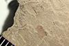http://mczbase.mcz.harvard.edu/specimen_images/entomology/paleo/large/PALE-41202_Arthropoda.jpg