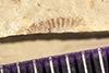 http://mczbase.mcz.harvard.edu/specimen_images/entomology/paleo/large/PALE-41206_Arthropoda.jpg