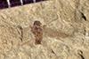 http://mczbase.mcz.harvard.edu/specimen_images/entomology/paleo/large/PALE-41225a_Arthropoda.jpg
