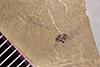 http://mczbase.mcz.harvard.edu/specimen_images/entomology/paleo/large/PALE-41267_Arthropoda.jpg