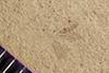 http://mczbase.mcz.harvard.edu/specimen_images/entomology/paleo/large/PALE-41335_Arthropoda.jpg