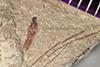 http://mczbase.mcz.harvard.edu/specimen_images/entomology/paleo/large/PALE-41369_Arthropoda.jpg