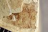 http://mczbase.mcz.harvard.edu/specimen_images/entomology/paleo/large/PALE-41391_Arthropoda.jpg