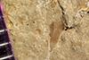 http://mczbase.mcz.harvard.edu/specimen_images/entomology/paleo/large/PALE-41412_Arthropoda.jpg