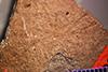 http://mczbase.mcz.harvard.edu/specimen_images/entomology/paleo/large/PALE-4142_Tethneus_provectus_type.jpg