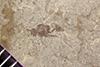 http://mczbase.mcz.harvard.edu/specimen_images/entomology/paleo/large/PALE-41475_Arthropoda.jpg