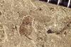 http://mczbase.mcz.harvard.edu/specimen_images/entomology/paleo/large/PALE-41482_Arthropoda.jpg