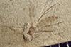 http://mczbase.mcz.harvard.edu/specimen_images/entomology/paleo/large/PALE-41547_Arthropoda.jpg
