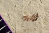 http://mczbase.mcz.harvard.edu/specimen_images/entomology/paleo/large/PALE-41568_Arthropoda.jpg