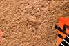http://mczbase.mcz.harvard.edu/specimen_images/entomology/paleo/large/PALE-4169_Aphidopsis_subterna_type.jpg