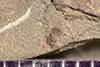 http://mczbase.mcz.harvard.edu/specimen_images/entomology/paleo/large/PALE-41871_Arthropoda.jpg