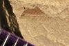 http://mczbase.mcz.harvard.edu/specimen_images/entomology/paleo/large/PALE-41911_Arthropoda.jpg