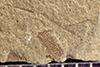http://mczbase.mcz.harvard.edu/specimen_images/entomology/paleo/large/PALE-41982_Arthropoda.jpg