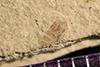 http://mczbase.mcz.harvard.edu/specimen_images/entomology/paleo/large/PALE-42011_Arthropoda.jpg