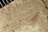 http://mczbase.mcz.harvard.edu/specimen_images/entomology/paleo/large/PALE-42024_Arthropoda.jpg