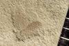http://mczbase.mcz.harvard.edu/specimen_images/entomology/paleo/large/PALE-42057_Arthropoda.jpg