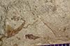 http://mczbase.mcz.harvard.edu/specimen_images/entomology/paleo/large/PALE-42097_Arthropoda.jpg