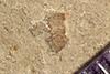 http://mczbase.mcz.harvard.edu/specimen_images/entomology/paleo/large/PALE-42117_Arthropoda.jpg