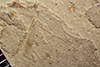 http://mczbase.mcz.harvard.edu/specimen_images/entomology/paleo/large/PALE-42129_Arthropoda.jpg