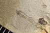 http://mczbase.mcz.harvard.edu/specimen_images/entomology/paleo/large/PALE-42162_Arthropoda.jpg