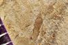 http://mczbase.mcz.harvard.edu/specimen_images/entomology/paleo/large/PALE-42193_Arthropoda.jpg