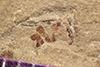http://mczbase.mcz.harvard.edu/specimen_images/entomology/paleo/large/PALE-42235_Arthropoda.jpg