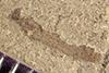 http://mczbase.mcz.harvard.edu/specimen_images/entomology/paleo/large/PALE-42331_Arthropoda.jpg