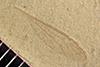 http://mczbase.mcz.harvard.edu/specimen_images/entomology/paleo/large/PALE-42374_Arthropoda.jpg