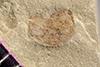 http://mczbase.mcz.harvard.edu/specimen_images/entomology/paleo/large/PALE-42408_Arthropoda.jpg