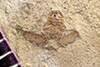 http://mczbase.mcz.harvard.edu/specimen_images/entomology/paleo/large/PALE-42414_Arthropoda.jpg