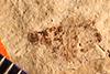 http://mczbase.mcz.harvard.edu/specimen_images/entomology/paleo/large/PALE-4245_Rhepocoris_praevalens_type.jpg
