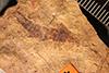 http://mczbase.mcz.harvard.edu/specimen_images/entomology/paleo/large/PALE-432_Labiduromma_mortale_holotype.jpg