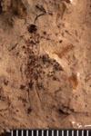 http://mczbase.mcz.harvard.edu/specimen_images/entomology/paleo/large/PALE-4439_Artinska_clara_etho.jpg
